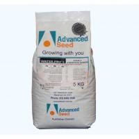 Starter Pro Fertilizer