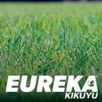 Eureka Kikuyu (Instant Turf)